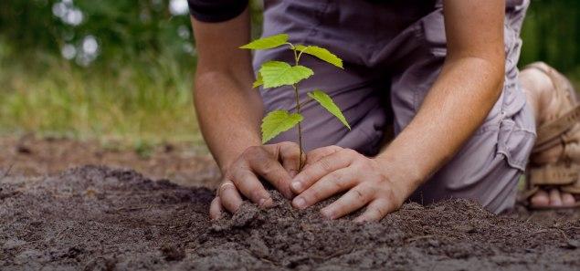 savetreessaveearth-tree-plantation
