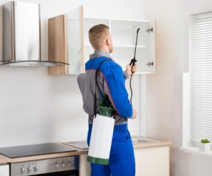 Benefits of pest control at home